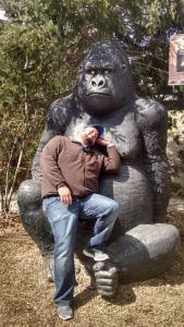 bestevez gorilla